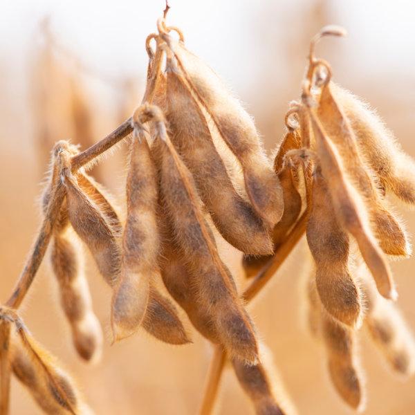 Hoe duurzaam is soja eigenlijk?
