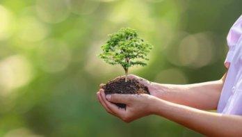Hoe je kunt bijdragen aan een grotere biodiversiteit
