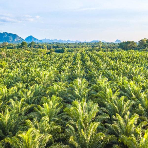 Zo vermijd je (zoveel mogelijk) palmolie