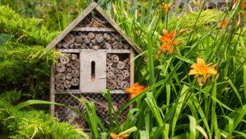 Zo maak je een insectenhotel