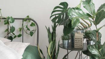 10x planten voor in de slaapkamer