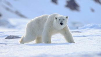 Veelgehoorde mythes over de klimaatcrisis